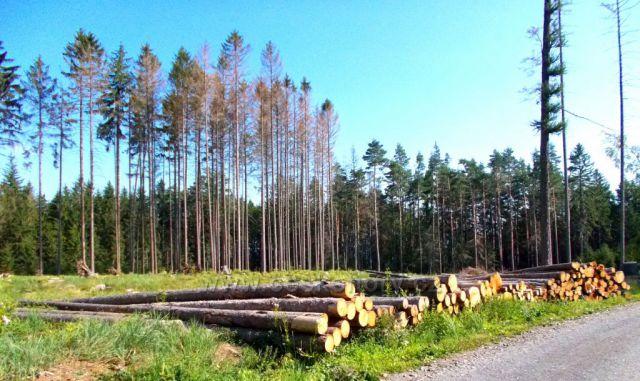 Nemocné lesy