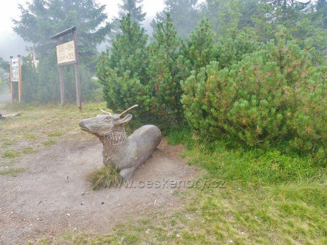 Horní Malá Úpa - areál chaty Jelenky