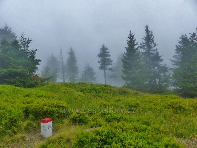 Horní Malá Úpa - Cestu česko-polské stále provázejí velké plochy borůvkového podrostu