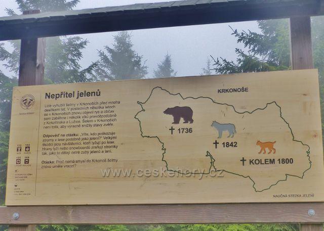 Horní Malá Úpa - Soví sedlo, panel informující o vyhynutí přirozených nepřátel jelení zvěře