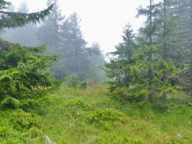 Horní Malá Úpa -. kolem Cesty česko-polského přátelství ze Sovího sedla se začínají objevovat ostrůvky suchopýru