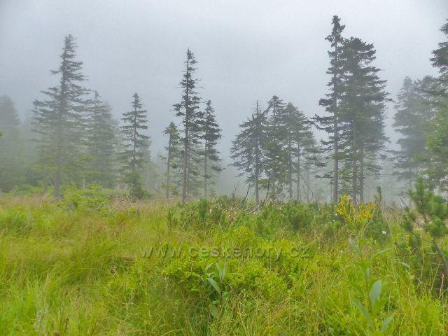 Horní Malá Úpa - lesní poros kolem Cesty česko-polského přátelství