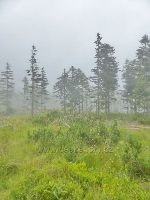 Horní Malá Úpa - lesní porost podél Cesty česko-polského přátelství