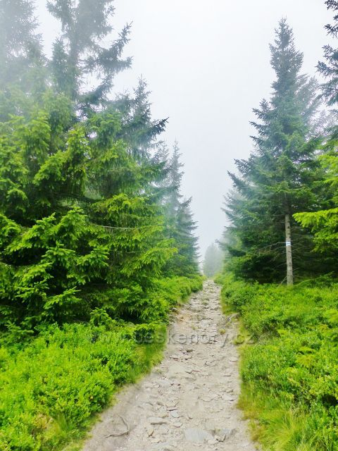 Horní Malá Úpa - cesta po modré TZ po česko-polské hranici k vrcholu Tabule(1282m m.n.m.)