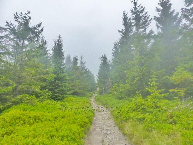 Horní Malá Úpa - cesta po česko-polské hranici k vrcholu Tabule