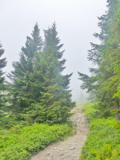 Horní Malá Úpa - cesta po modré TZ po česko-polské hranici k vrcholu Tabule