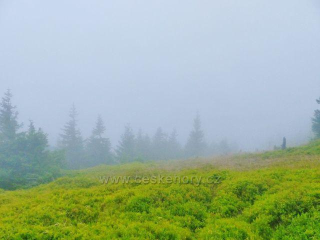 Horní Malá Úpa - kolem stezky k vrcholu Tabule přibývá s nadmořskou výškou i borůvčí honosící se množstvím sladkých plodů