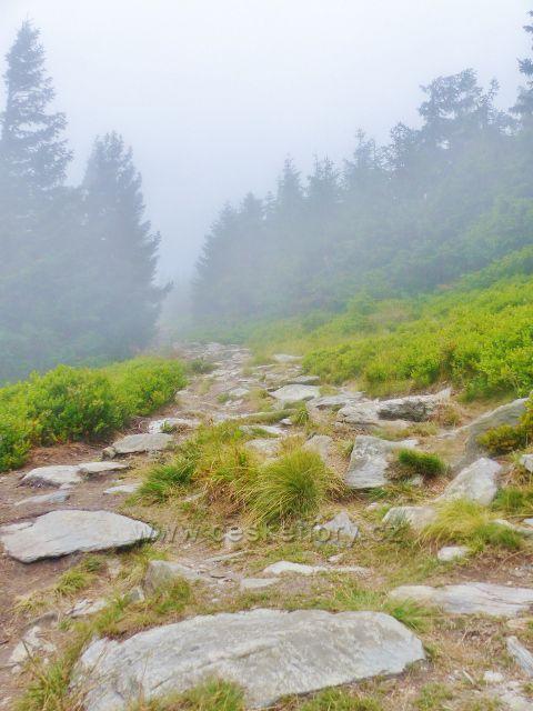 Horní Malá Úpa - kamenitý ráz stezky k vrcholu Tabule
