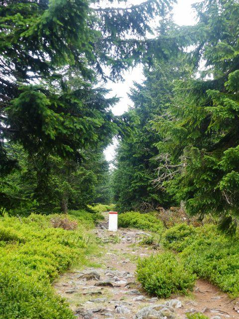 Horní Malá Úpa - turistická stezka na vedlejší vrchol Tabule na vrchol Čelo(1269 m.n.m.) stále kopíruje státní hranici s Polskem