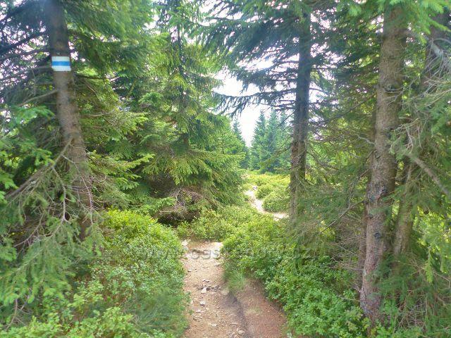 Horní Malá Úpa - stezka po modré TZ sestupuje podél sjezdovky na Pomezní boudy