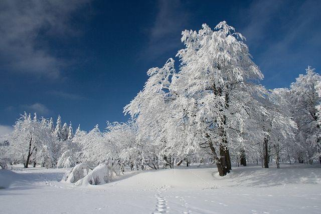 Zima u Dlouhé Louky