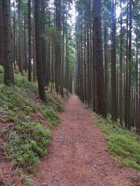Horní Maršov -vrstevnicová Emmina cesta vede po úbočí Dlouhého hřebenu