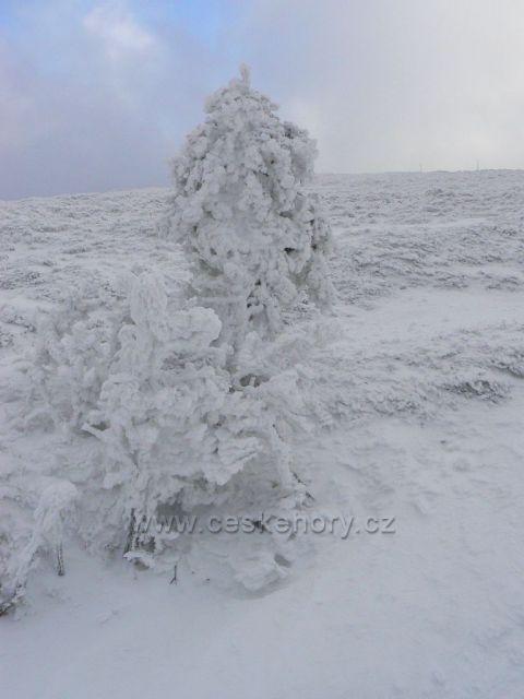 Zima na Vysoké holi