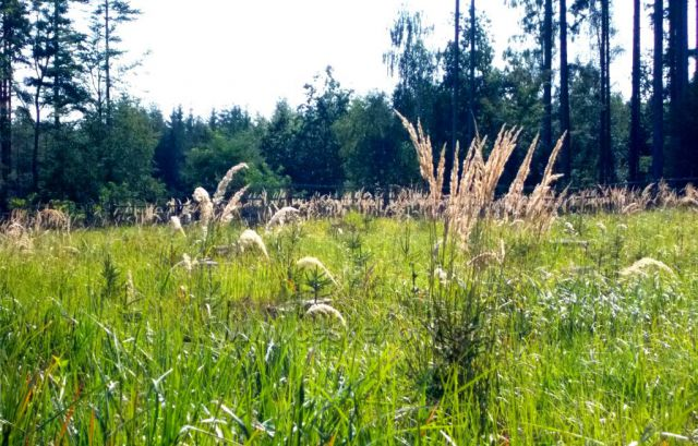 Konec léta v lese u Nasavrk