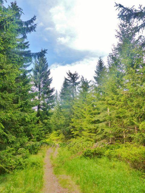 Malá Úpa - cesta ing. Nováka po zelené TZ na vrchol Lysečinské hory