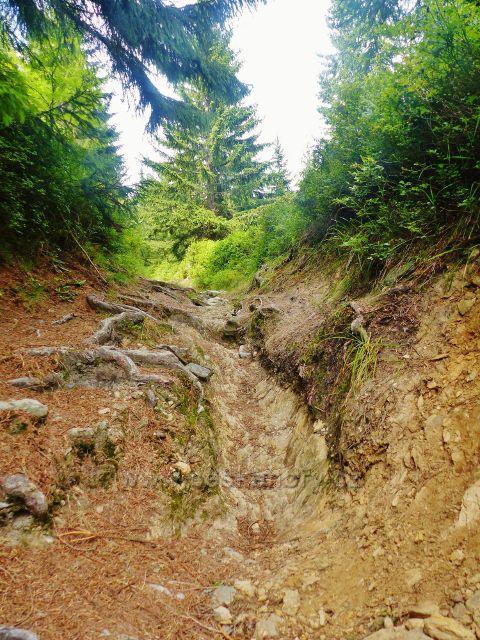 Malá Úpa - cesta po zelené TZ k vrcholu Lysečinské hory ve svém posledním úseku mění v prudké kamenité koryto