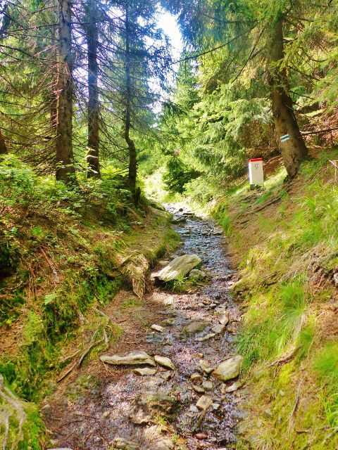 Malá Úpa - koryto kamenité stezky k vrcholu Lysečinské hory stále lemují hraniční mezníky