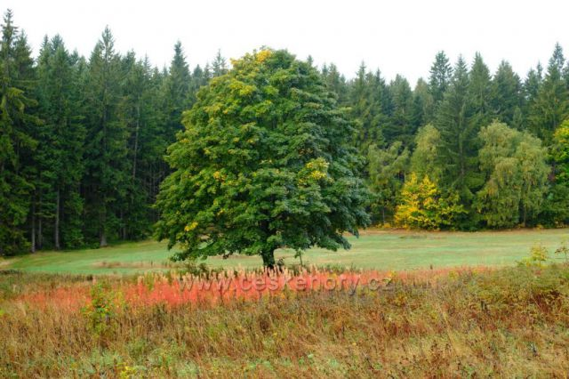 Podzim v Maxově