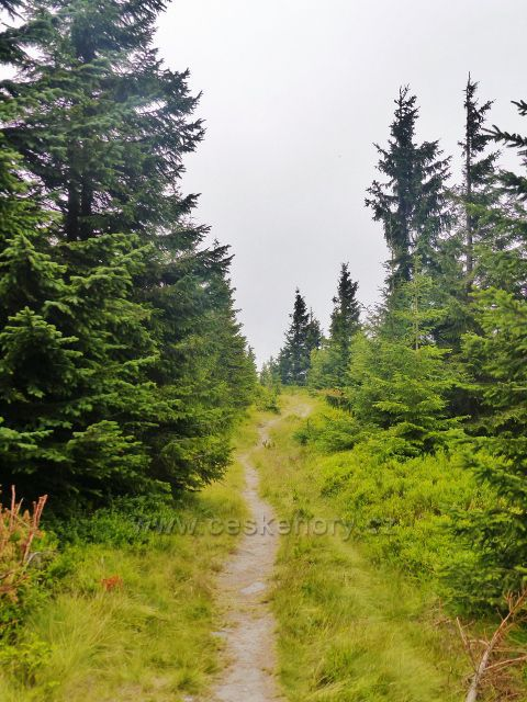 Malá Úpa - stezka po zelené TZ z vrcholu Lysečinské hoéčy k Pomezním boudám stále kopíruje státní hranici s Polskem