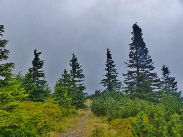 Malá Úpa - stezka z Lysečinské hory k Pomezním boudám