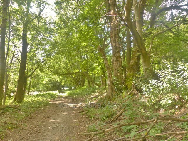 Žacléř - stará Vernířovská cesta nad Prkenným Dolem