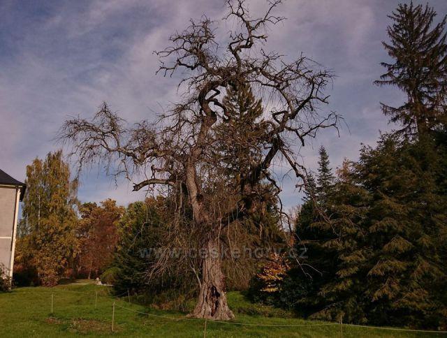 nejhezčí strom