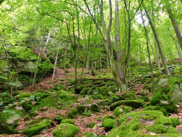 Semily - skalnatý svah nad Riegrovou stezkou v PR Údolí Jizery