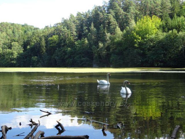 Podtrosecká údolí - rybník Vidlák
