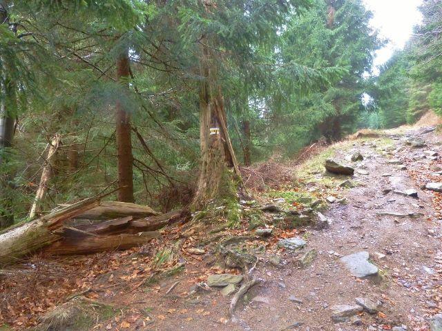 Kletno - cesta po žluté TZ k sedlu Sniežnická