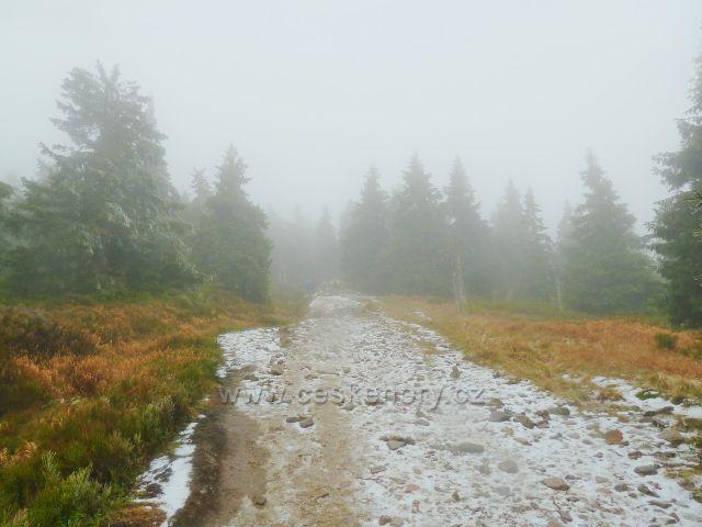 Cesta po zelené TZ ze Schroniska na Sniežniku k vrcholu Králického Sněžníku je poznamenána sněhovým popraškem