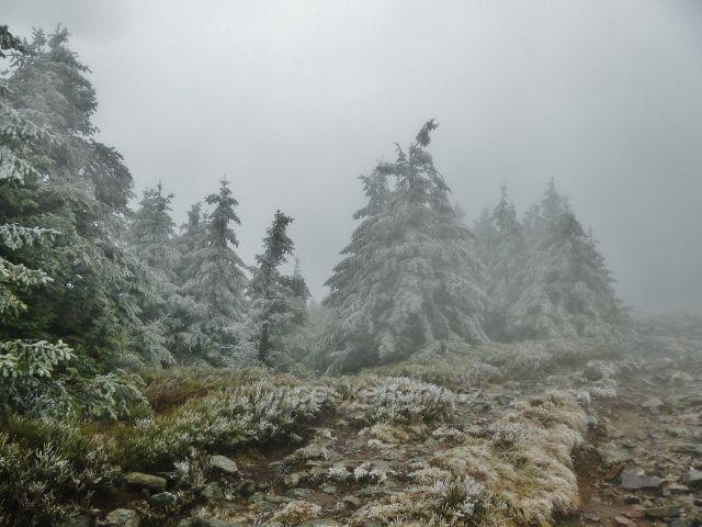 Králický Sněžník - námraza pod vrcholem