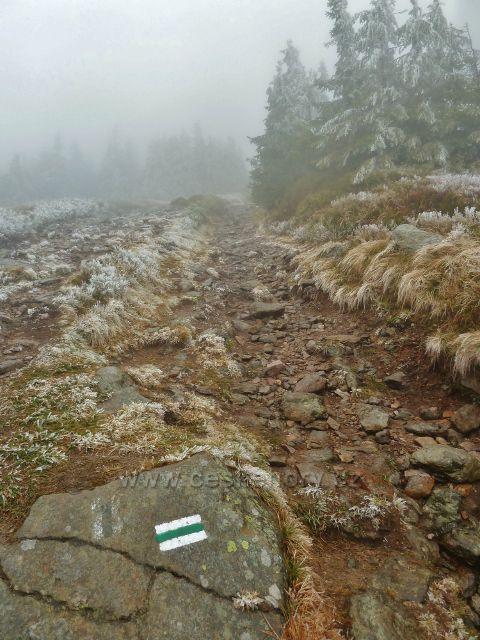 Pod vrcholem Králického Sněžníku kopíruje zelená TZ státní hranici CZ/PL