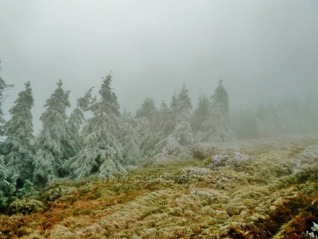 Pod vrcholem Králického Sněžníku