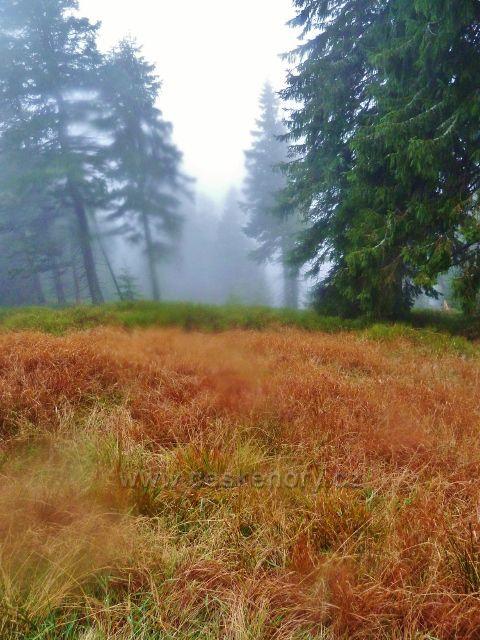 Králický Sněžník - barvy podzimu má i bylinný podrost podél cesty po červené TZ z rozcestí Franciska do Stříbrnického sedla