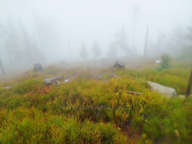 Králický Sněžník - lesní porost na úbočí vrchu Stříbrnická