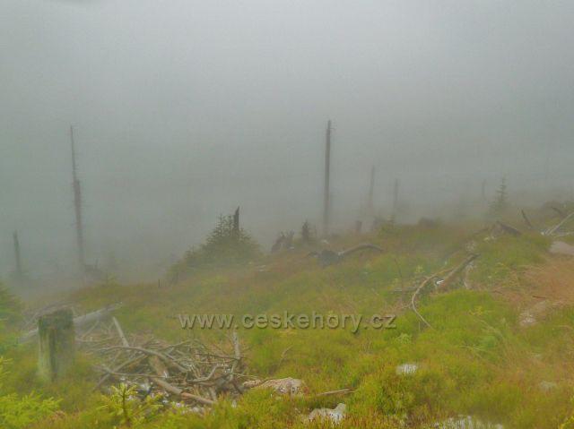Králický Sněžník - zbytky lesního porostu na svahu vrchu Stříbrnícká