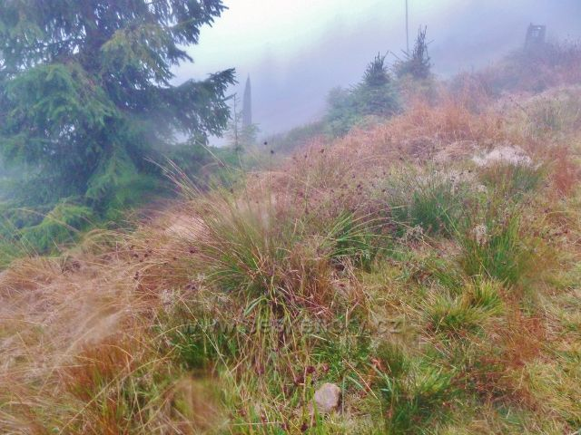 Králický Sněžník - lesní porost nad rozcestím Pod Ludmilou