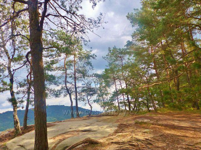 Klokočské skály -hřeben skal okupují převážně borovice a břízy. V průhledu se rýsuje Kozákov