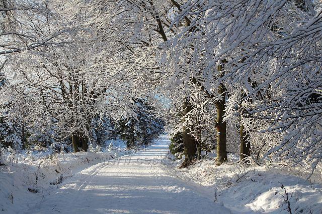 Sněhová krajka