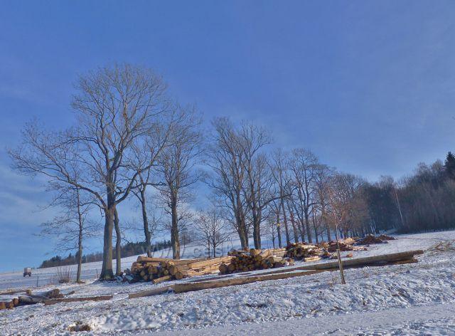 """Králíky - skládky """"kůrovcového"""" dřeva na úpatí Mariánské hory"""