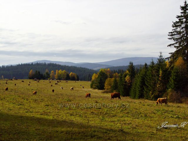 Šumavské pastviny