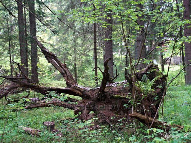 Šumava divoká