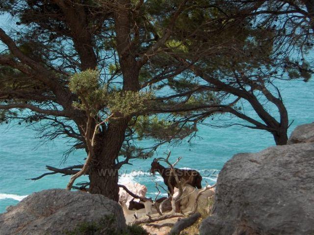 Kozy u Jadranu