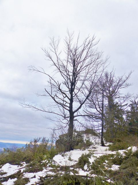 Jestřebí hory - těžbou dřeva odkryté výhledové místo u skalního výchozu u rozcestí na hřebenu pod rozhlednou Žaltman