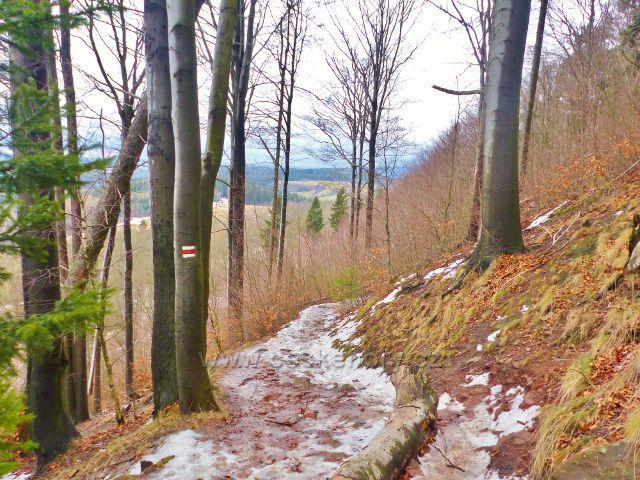 Jestřebí hory - stezka po červené TZ k rozcestí Pod Pasekou vede svahem Markušovického kopce