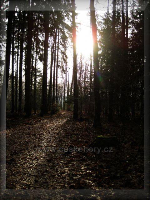 bukový les nad Broumarem
