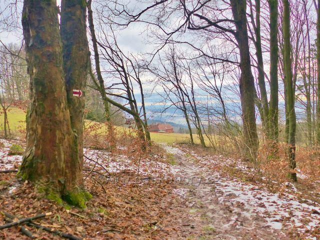 Malé Svatoňovice - cesta bratří Čapků opouští lesní porost aby pokračovala po pastvinách Na Horách