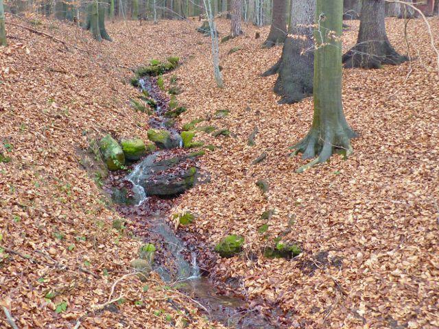Malé Svatoňovice - Lesní potok na jižním svahu Jestřebích hor odvádí vody i z bývalé štoly sv. Prokopa