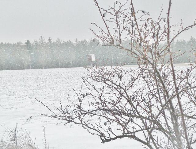 Kunvald - sněží, pohled k posedu u lesa ze silničky na Končiny