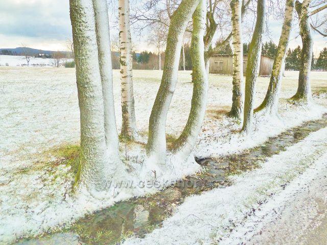 Kunvald - Končiny, stromořadí u silnice